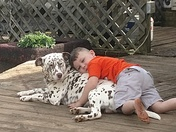 My grandson Branson with my liver spotted Dalmatian named Bentley