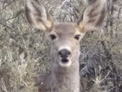 That moment you suprise a deer