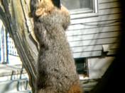 Bird slash squirrel feeder