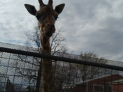Spring break at Gentry Zoo