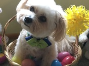 Happy Easter Pup