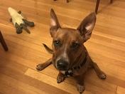Oakley the Dog
