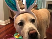Andy loves Bunny Day