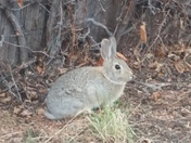 Got up close to the easter bunny!