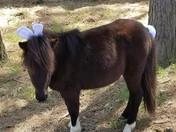 Moon Pie Easter Pony