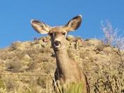I love visiting my deer friends