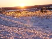 Winter Flash Freeze