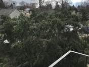 60 foot tree fell in South Park