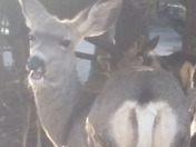 It's official these deer are halarious