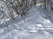 Bear Foot prints in the morning snow