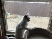 Prissy's first look at snow.