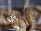A Talkative Squirrel