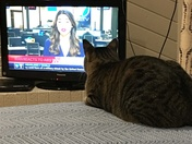 Kira the cat gets the news from Erin
