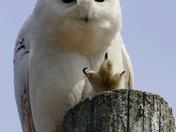 Owl Humour