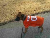 Clemson Fan Dog !!