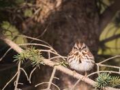 RG_420 | Sparrow