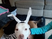 Easter pitbull