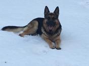 Maddox  enjoying the last of the snow