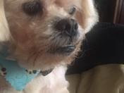 13 year old peekaboo Max