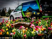 Spring Tulips at McNaughton Real Estate 4299 W Persimmon Fayetteville