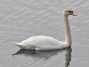 Birds on Governors Lake, Raymond NH