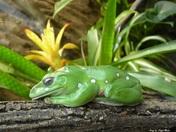 The Sleeping Frog