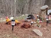 Chickens bathing in the fairy garden