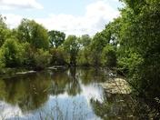 Cosumnes River Wildlife Refuge 4/12/18