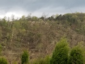Tornado Damage South of Chester