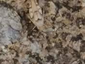 Camoflauged grasshopper