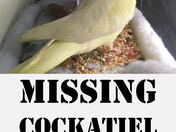 My Beloved Cockatiel