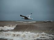 Windy day on Lake MI