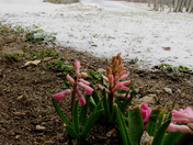 Today's sleet in Moultonborough is making the plants in the yard very unhappy!