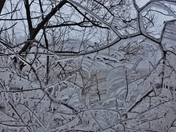 Tree branches decorated by ice in the mid April wind and frozen rain storm.
