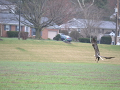 Bald Eagle Nissley Rd and Bowman Rd