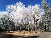 Glorieta Iced Trees 2018