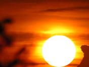 ariving sun