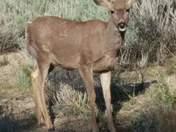 Perfect deer shot