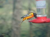 A new humming bird buddy.