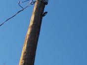 Woodpecker pecking a wooden pole