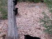 Momma and tree (3) bears