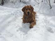 Bailey loves the snow