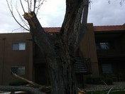 Broken trees at my apartments