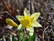 Enjoying a Spring day