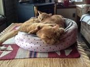 Cheddar and Wylie