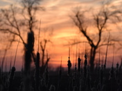 Sunset 4/23