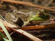 Frog at the Bio Park