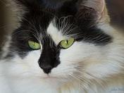 Green Eyed Girl.