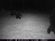 Bears in my yard last night.