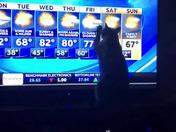 Gia our Siamese is interested in the weather at the end of this week